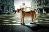 Kto się boi dzikiego kota, czyli wokół idei miasta biocentrycznego