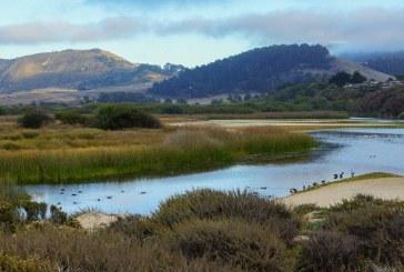 Powrót dzikich rzek